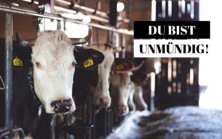 Kuh Stall Massentierhaltung Teaser pex 69170
