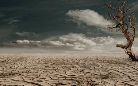 Vertrocknete Steppe Toter Baum Klimawandel Tod Welt Nutripunk pix279862
