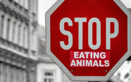 Vegan Activism Stop Eating Animals Sticker Street Sign