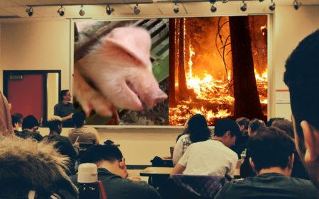 Mensch Tier Umwelt Schule Unterricht