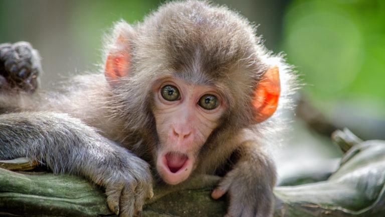 Schock Affe Petition Vegane Worte Produkte