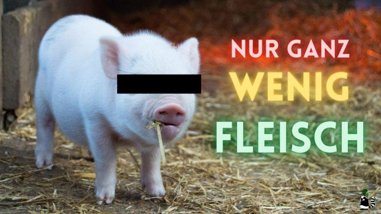 flexitarier nur ganz wenig fleisch teaser schwein bild